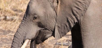 レンジャーは象牙やサイの角を探す密猟者により命を失うことがある。写真提供:Derek Keats/flickr)