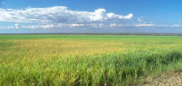 マダガスカルの湿地での米栽培写真提供:Roger Safford
