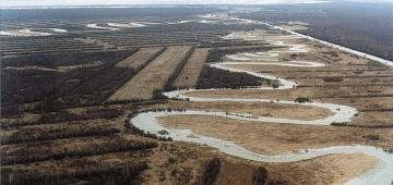 ラトビアでの森林破壊写真提供:(c) Ariel Brunner