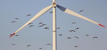 風力発電用風車写真提供:Nicky Petkov