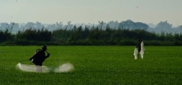 農薬散布写真提供: IRRI Photo (Chris Quintana)