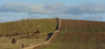 EUは持続不能な農業への対策に失敗しています。写真はデンマークの集約的農業の農地。 写真提供: © Jan Skriver