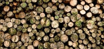 バイオ燃料の目的で森林から木材を得ることは炭素排出を増やし、炭素貯蔵量を減らします。 写真提供: Wagner T. Cassimiro 'Aranha'/Flickr