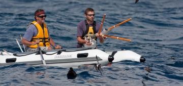 フィジーミズナギドリとソロモンミズナギドリを守るための鍵になると思われるニュージーランドコアシナガウミツバメを海上で捕獲しているNeil Fitzgerald と Chris Gaskin。 写真提供: Martin Berg