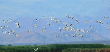 EUの生物多様性を守るのに4年で十分だろうか? 写真提供: BirdLife