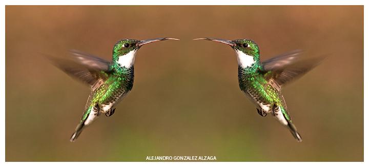 © Alejandro Gonzalez Alzaga