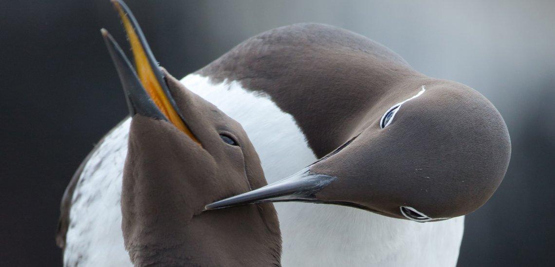 鳥の秘密:性生活が明らかに | ...