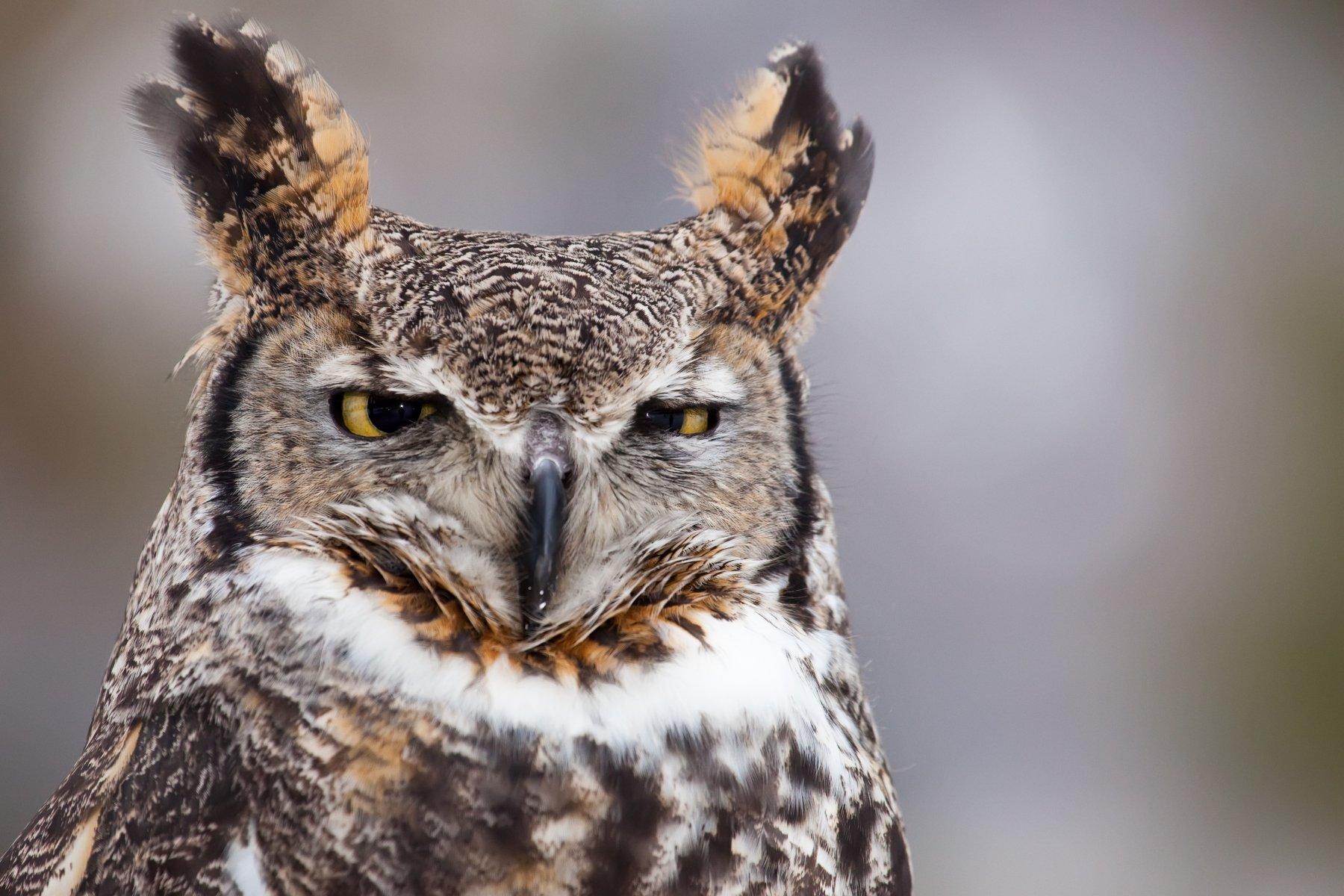 最新の報告:世界の猛禽類の半分以上が減少   バードライフ ...