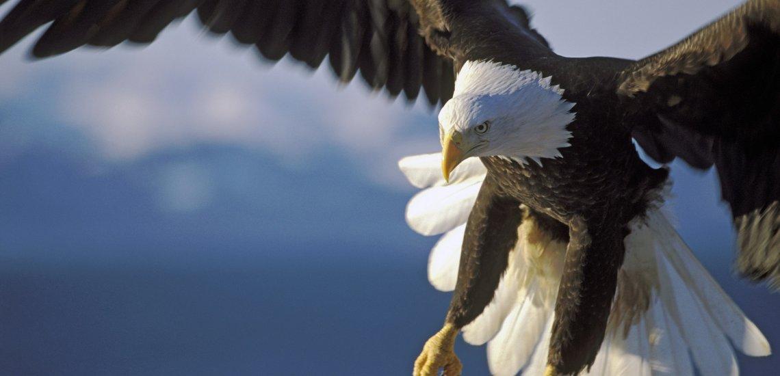 最新の報告:世界の猛禽類の半分...